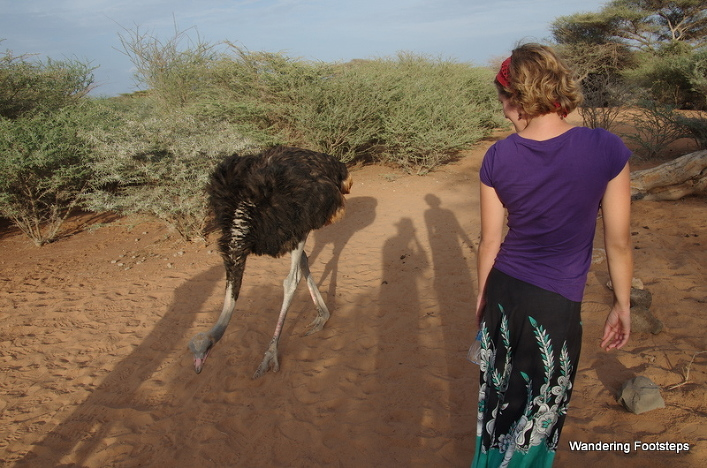 Visiting the Decan Animal Refuge, something that every visitor to Djibouti should do.